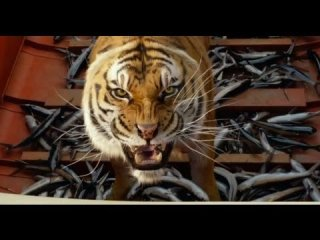 Your Movie Sucks: Quickie: Life of Pi