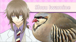 Giant Bomb: Quick Look: Hatoful Boyfriend